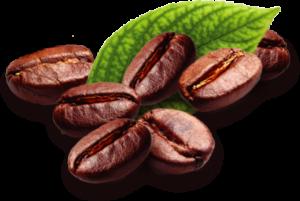 Café y cacao | Delilú Ecuador